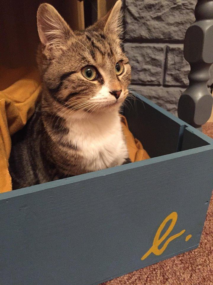 FLOCON adorable chaton de 3 mois 48377810