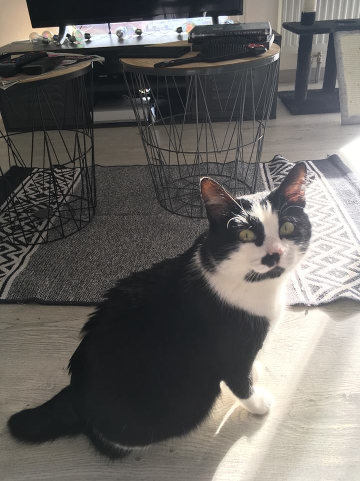 CHARLIE 3 ans ou la vraie vie misérable d'un chat des rues...  51328910
