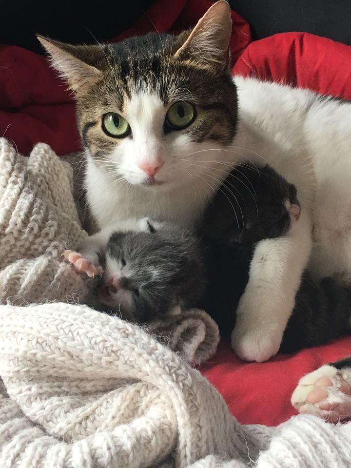 NEWT adorable maman des rues 54523812