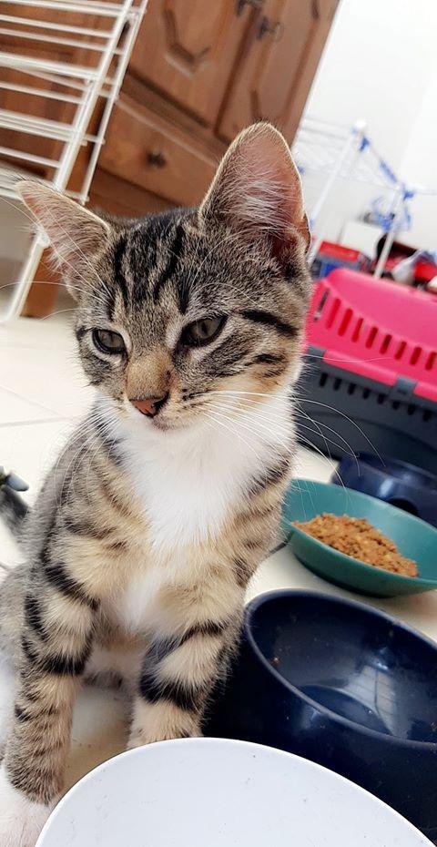 THOR petit tigré orphelin 3 mois 67766110