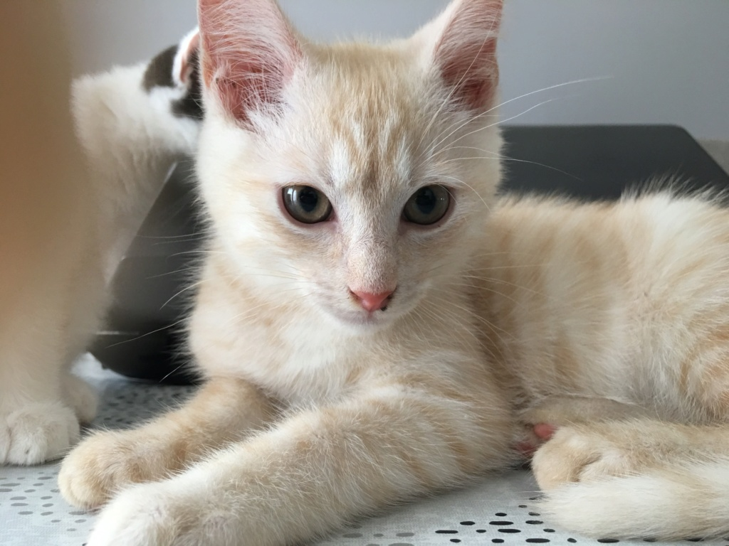 AIME magnifique chaton tabby sable Aimzo_10