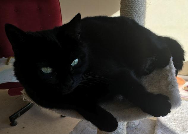 COMÈTE adorable chatte 4 ans Comete10