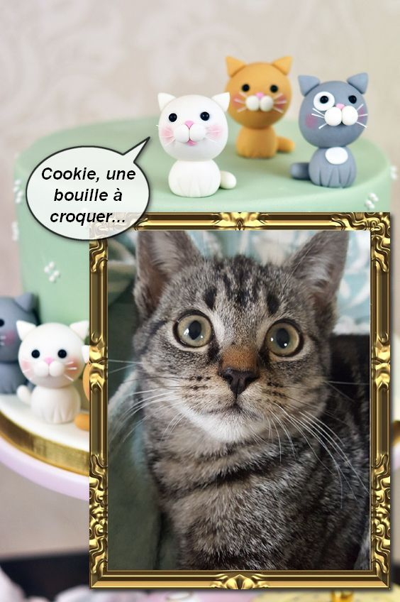 COOKIE adorable chatonne de 3 mois Cookie10