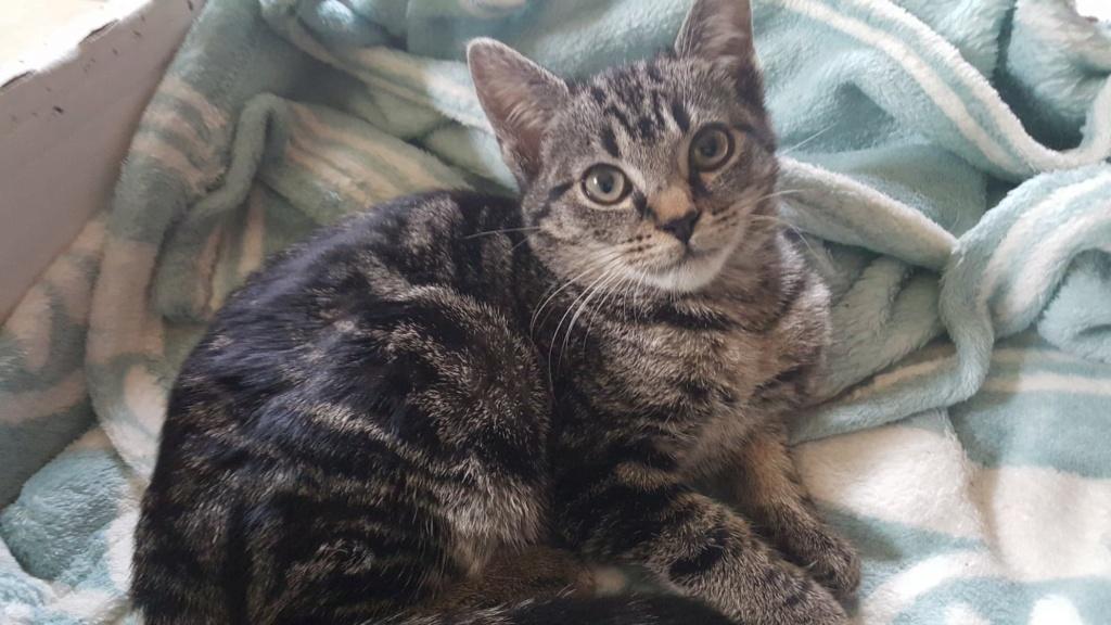 COOKIE adorable chatonne de 3 mois Cookie11