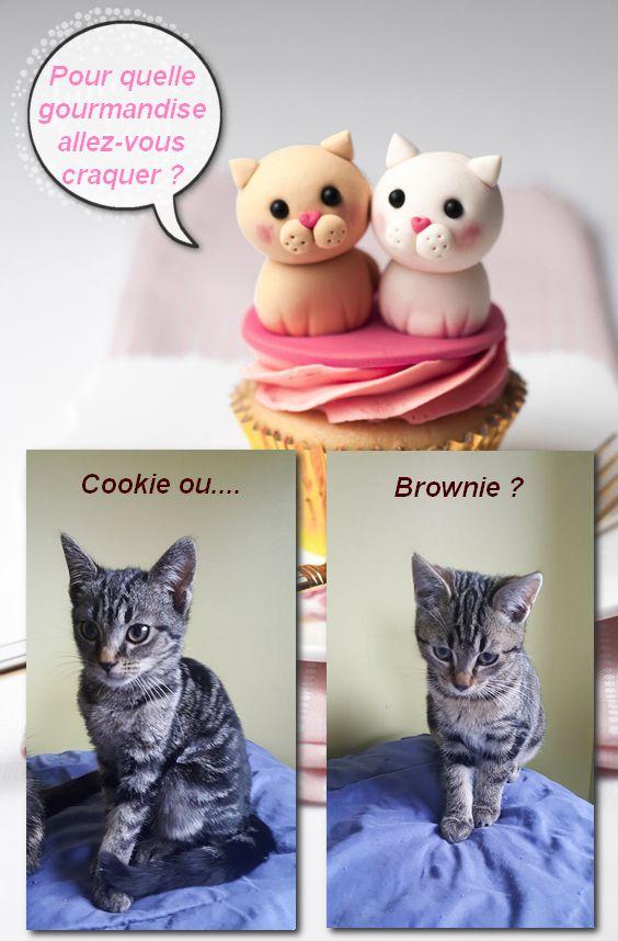 COOKIE adorable chatonne de 3 mois Duo11