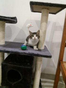 GASPARD adorable chaton des rues, 3 mois Gaspar10