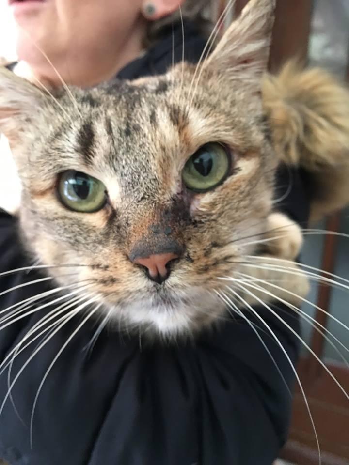 MÉLODIE chatte tigrée pot de colle de 7 ans  Mzolod10