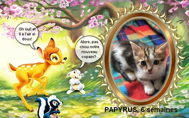 PAPYRUS adorable loulou de 1 mois et demi Papyru10