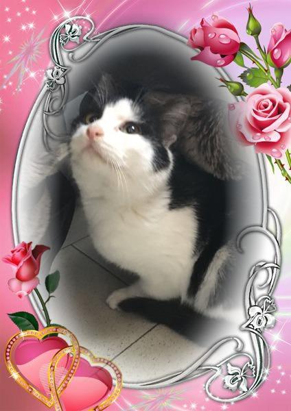 CHERIE adorable chaton de 3 mois câline et douce Pixiz-19