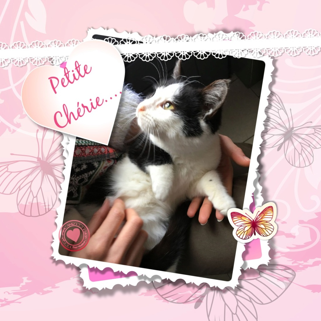 CHERIE adorable chaton de 3 mois câline et douce Pixiz-20