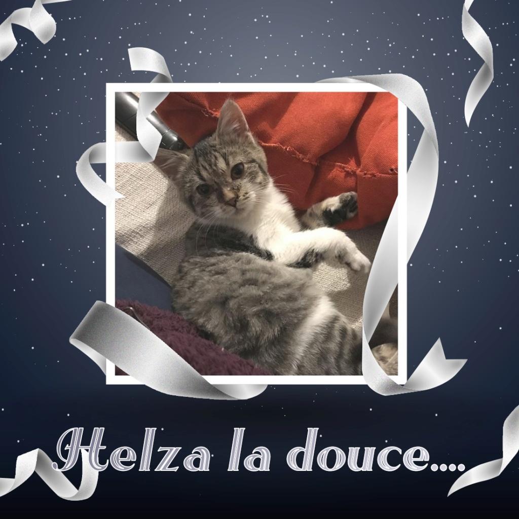 HELZA, chatonne adorable de 5 mois Pixiz-22
