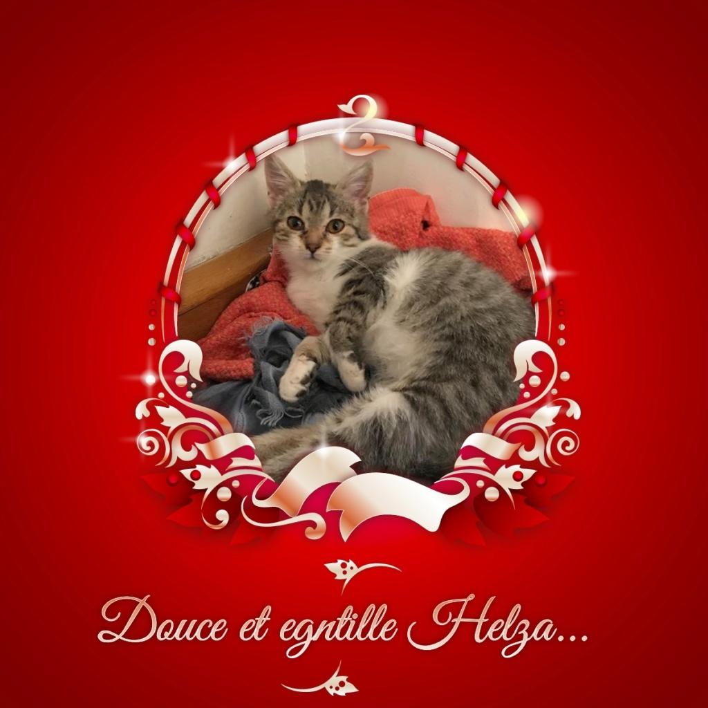 HELZA, chatonne adorable de 5 mois Pixiz-23
