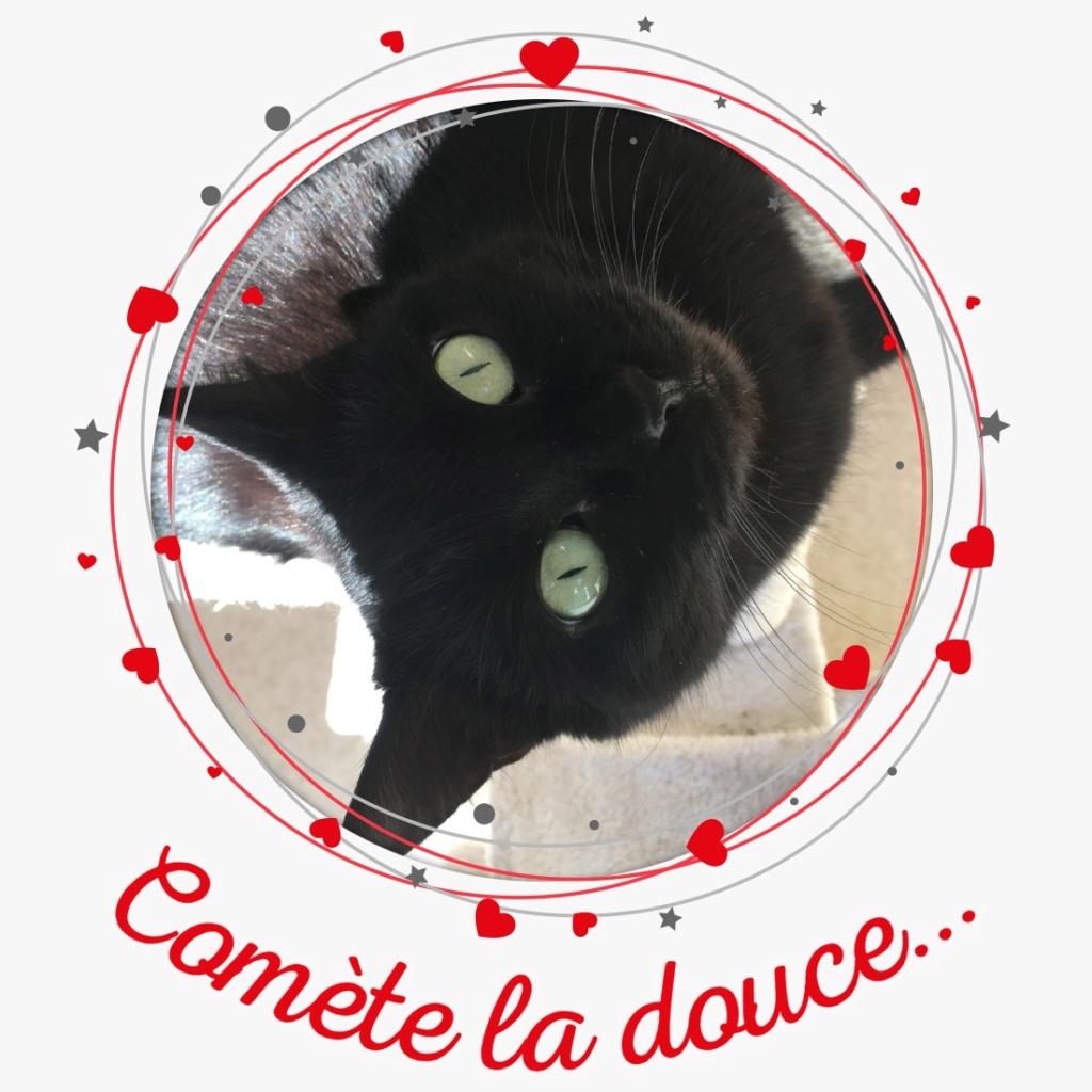 COMÈTE adorable chatte 4 ans Pixiz-56