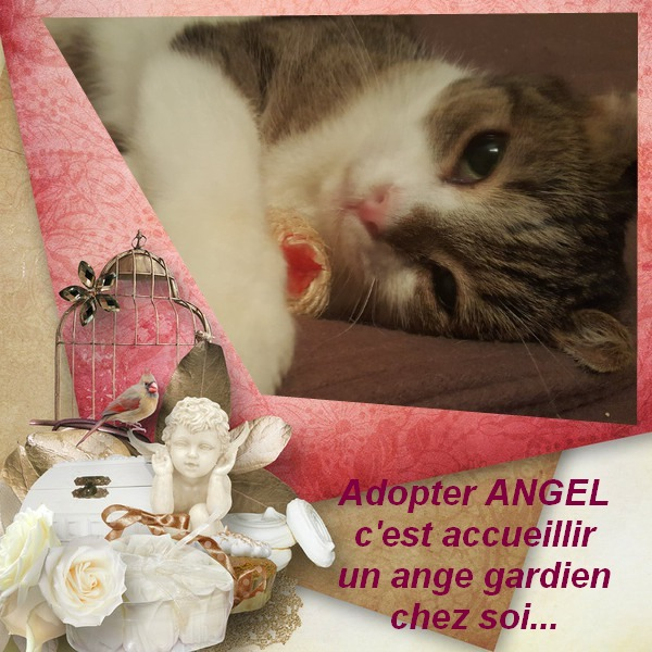 ANGEL 4 ans, la douceur incarnée Pixiz-60