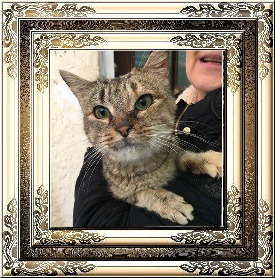 MÉLODIE chatte tigrée pot de colle de 7 ans  Pixiz-89