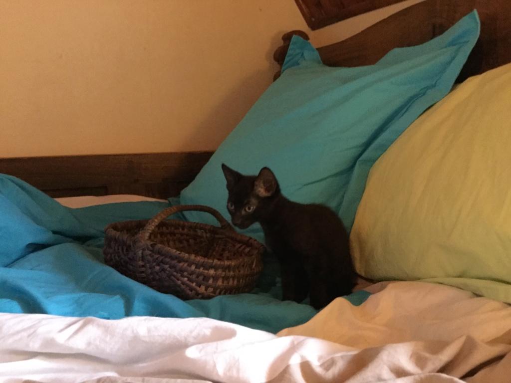 ORIZON, chaton noir, est né le 11 juin 2018 Img_0326