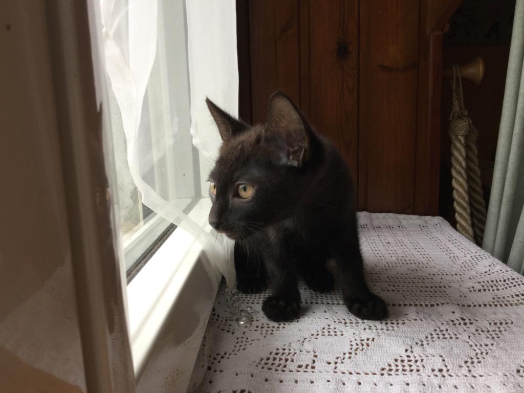 ORIZON, chaton noir, est né le 11 juin 2018 Img_0327