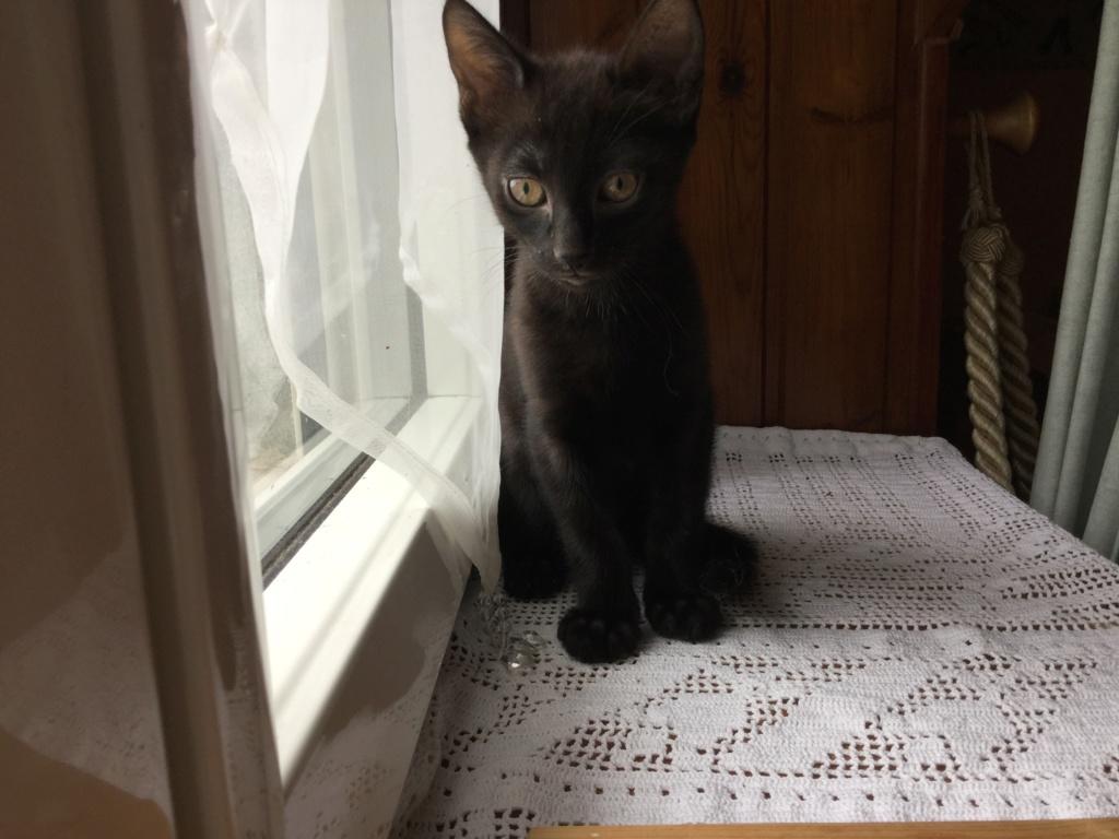 ORIZON, chaton noir, est né le 11 juin 2018 Img_0330