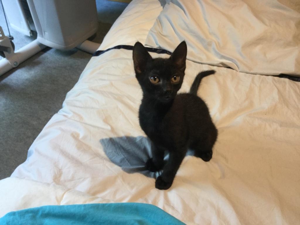 ORIZON, chaton noir, est né le 11 juin 2018 Img_0414