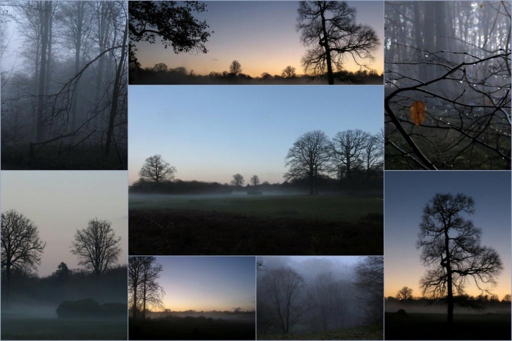 Des arbres , pour l'Arbre . - Page 3 Brouil10