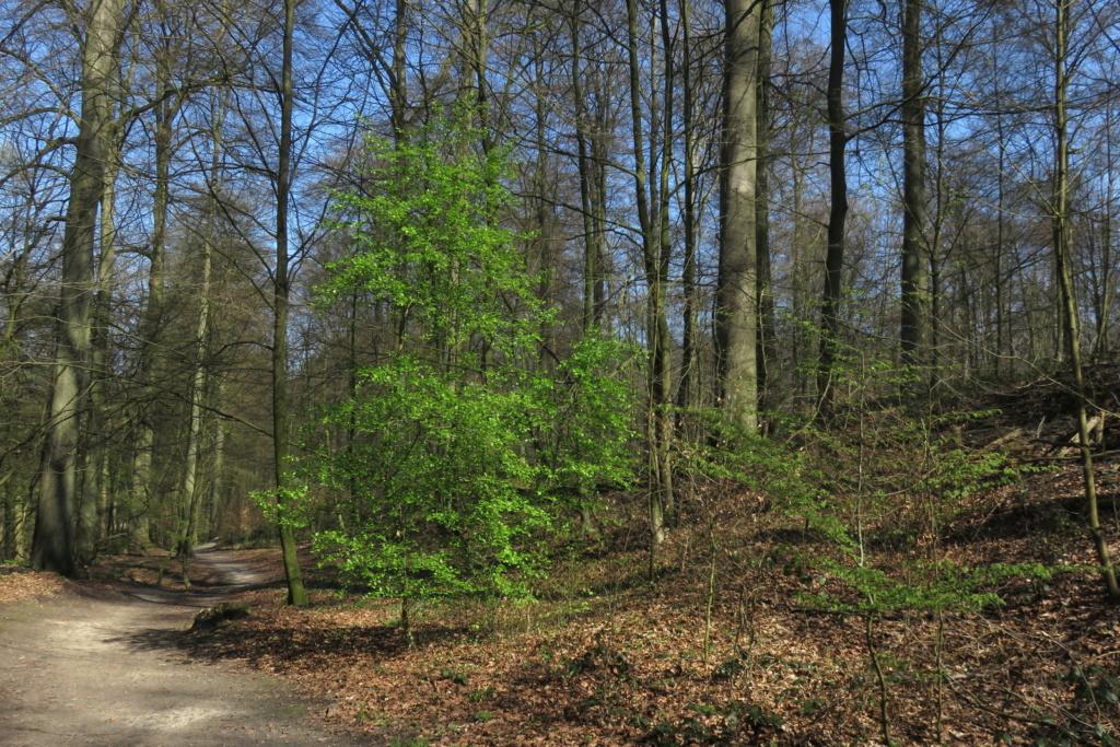 Des arbres , pour l'Arbre . - Page 2 Sx_32410