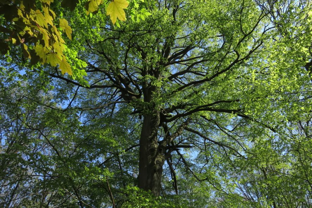 Des arbres , pour l'Arbre . - Page 2 Sx_32514