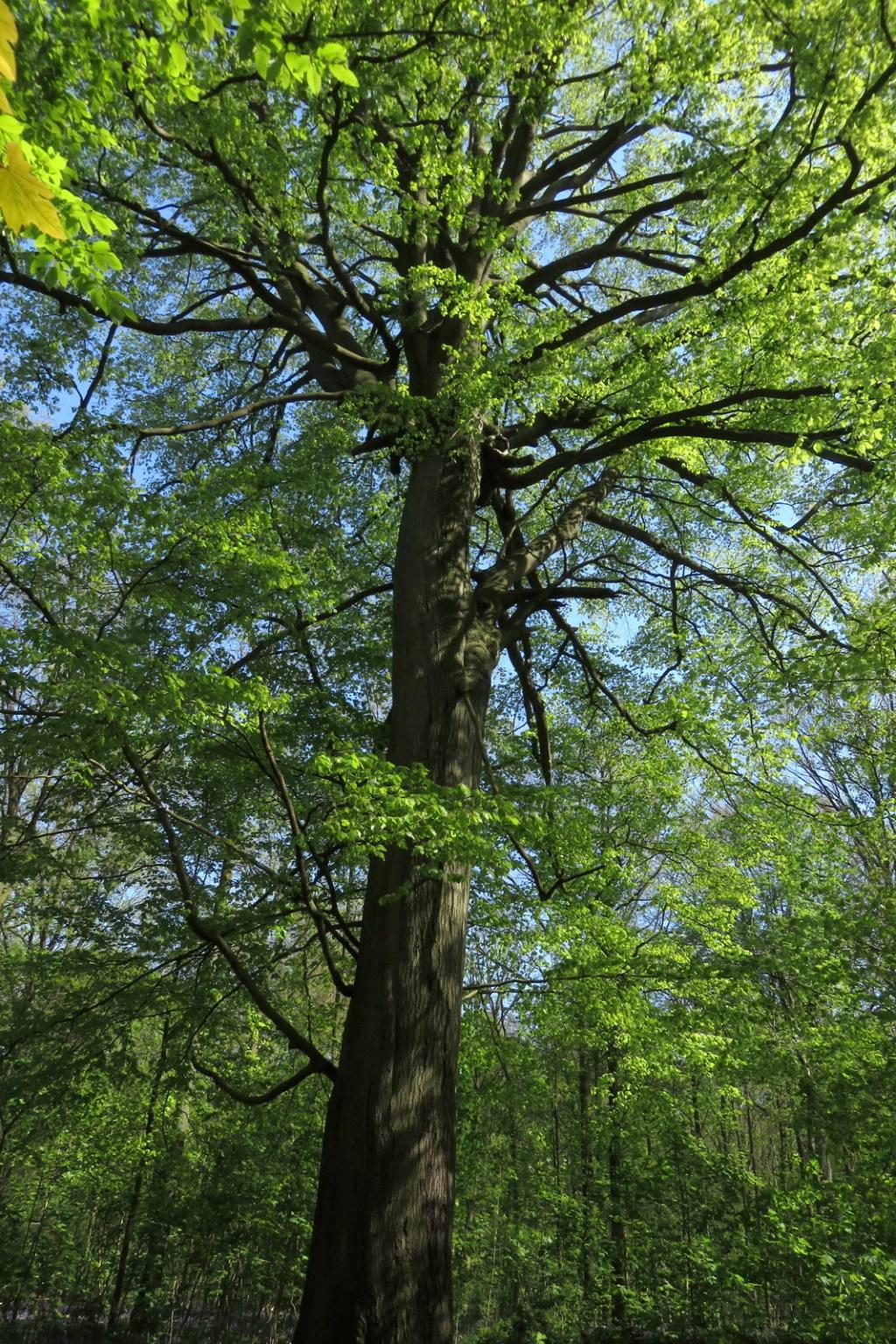 Des arbres , pour l'Arbre . - Page 2 Sx_32515