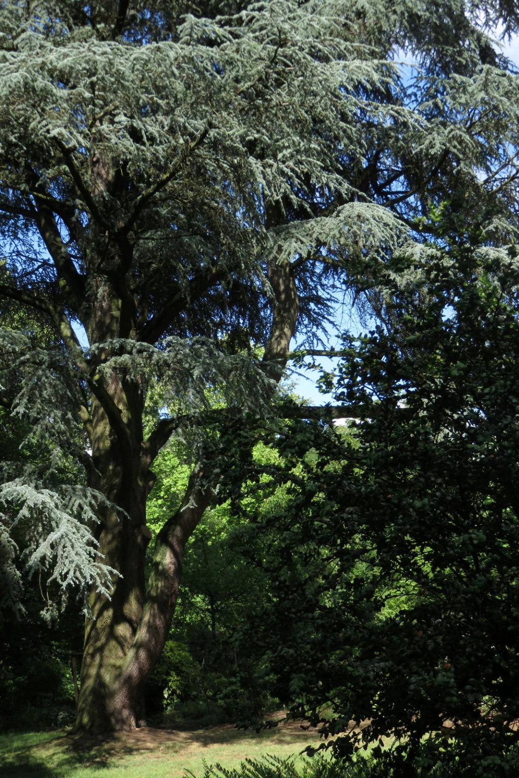 Des arbres , pour l'Arbre . - Page 2 Sx_35710