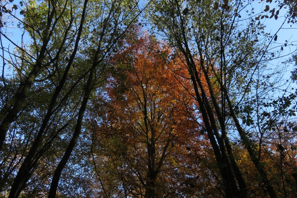 Des arbres , pour l'Arbre . - Page 3 Sx_36310