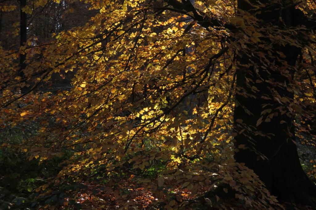 Des arbres , pour l'Arbre . - Page 3 Sx_36311