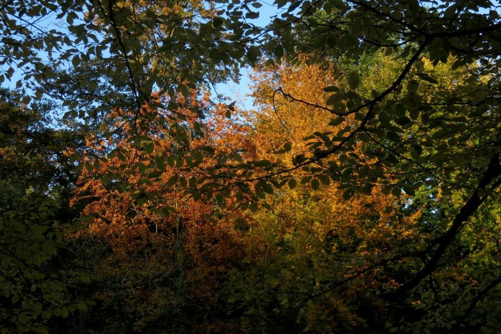 Des arbres , pour l'Arbre . - Page 3 Sx_37412