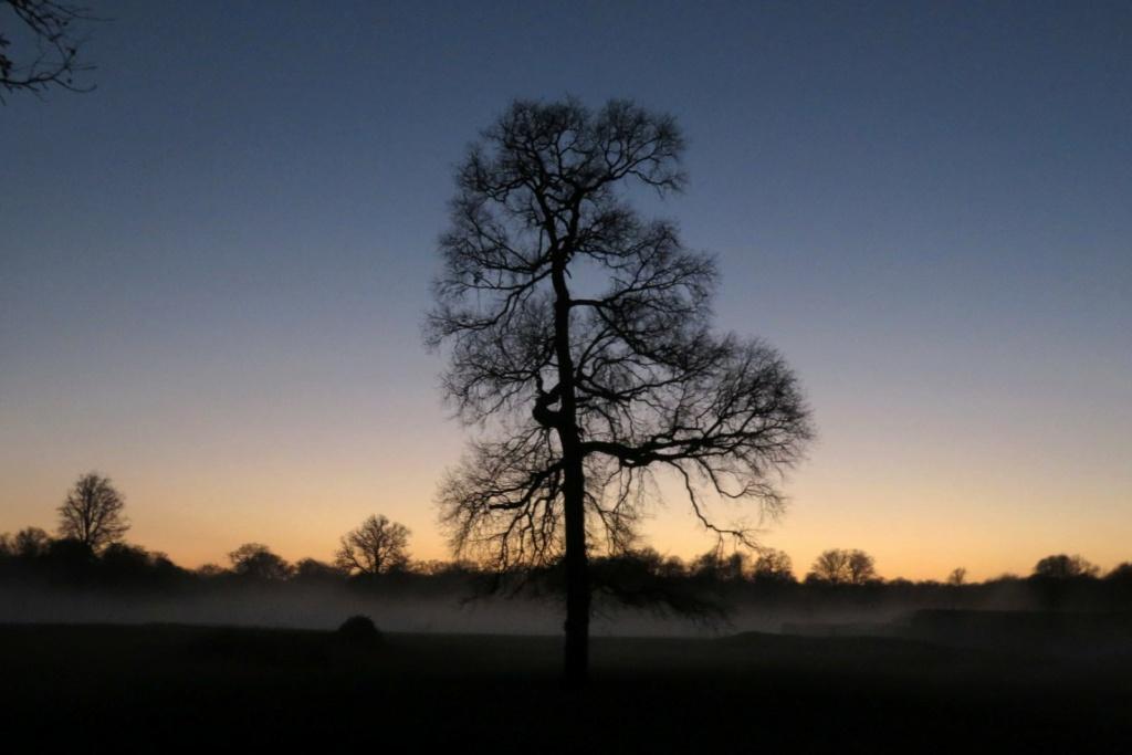 Des arbres , pour l'Arbre . - Page 3 Sx_37415
