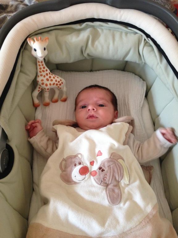 Naissance d'un baby Buell Img_6210