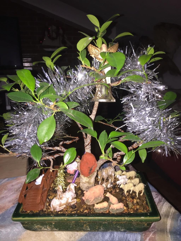 FELIZ NAVIDAD  ¡¡¡HOOOO¡¡¡ Ficus_10