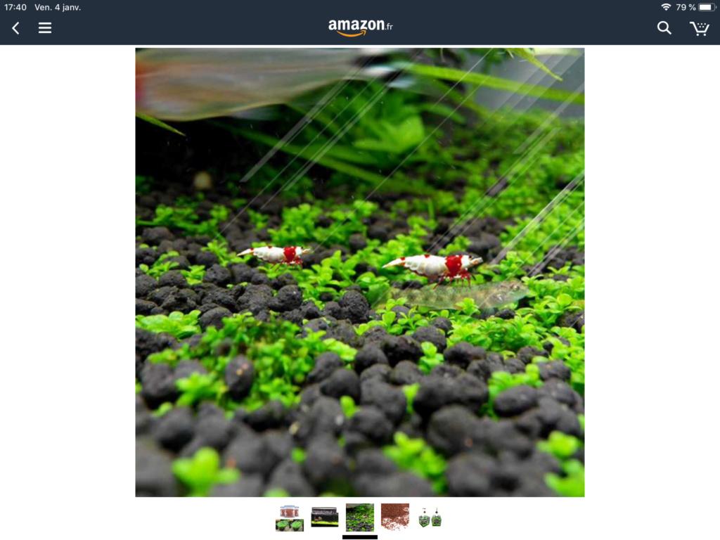 Plantes en Graine sur internet Ce88ef10