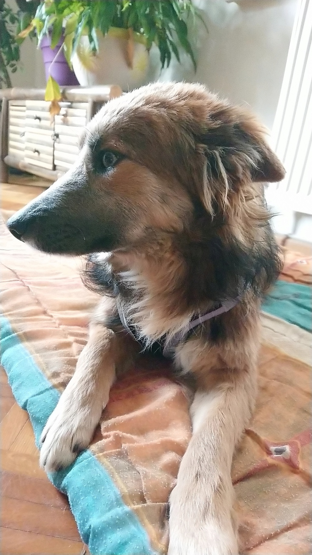 Ohmnia (ex-Zoey) - femelle - refuge d'Arad - réservée adoption (68) Snapch15