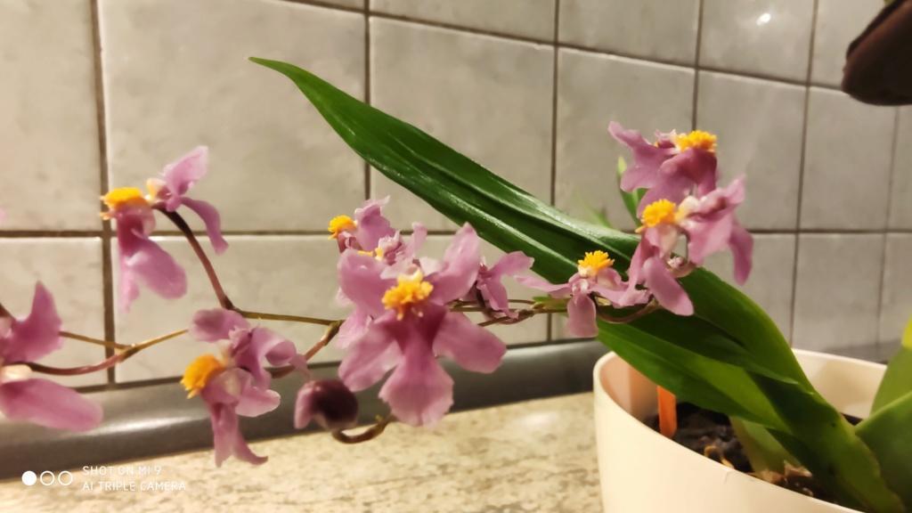 Orchideen-Neuzugang 2 - Seite 28 Img_2015