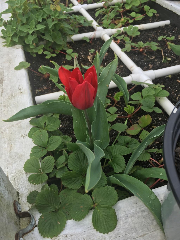 pretty sights found while walking thru the garden 2020-037