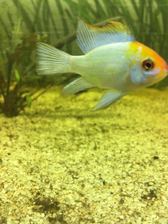 [URGENT]point blanc sur tous les poissons C7ba4910