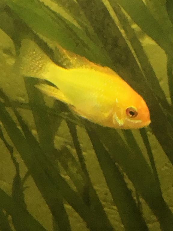 [URGENT]point blanc sur tous les poissons Ce556f10