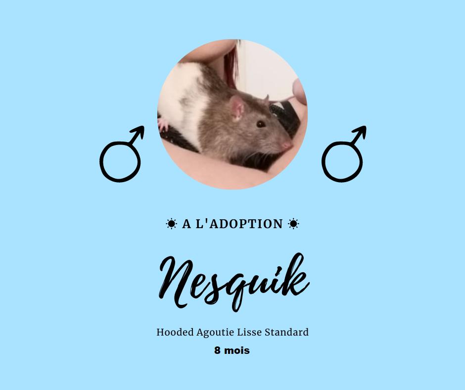 Recherche 3 rats jeunes  Nesqui11