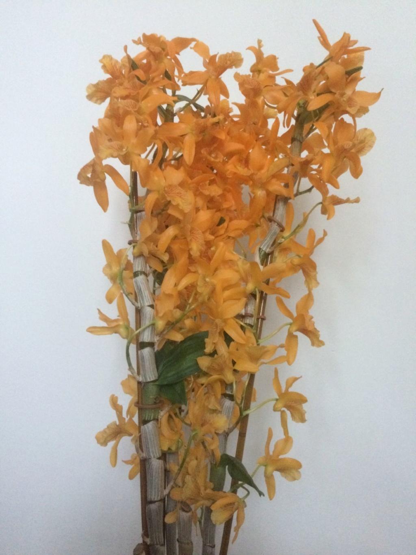 Orchideen-Neuzugang 2 - Seite 30 Img_5410