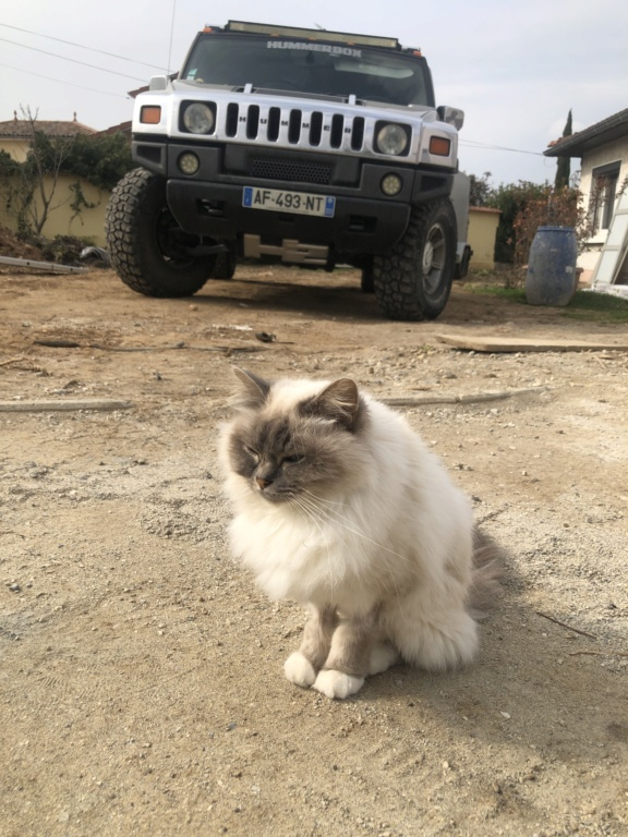 Photos de votre Hummer & animal de compagnie - Page 3 46b4bc10