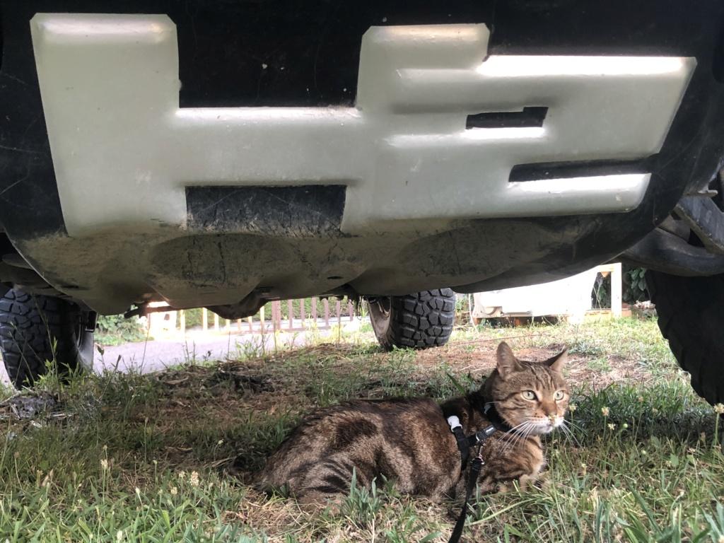 Photos de votre Hummer & animal de compagnie - Page 3 E60d8010