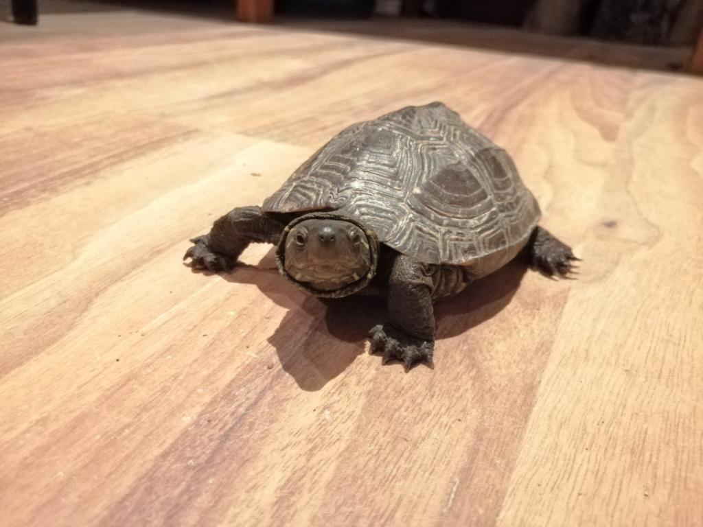Tartaruga terrestre abandonada - Ajudem!!! Img_2010