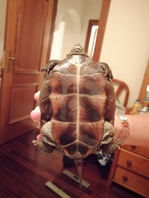 Tartaruga terrestre abandonada - Ajudem!!! Img_2012