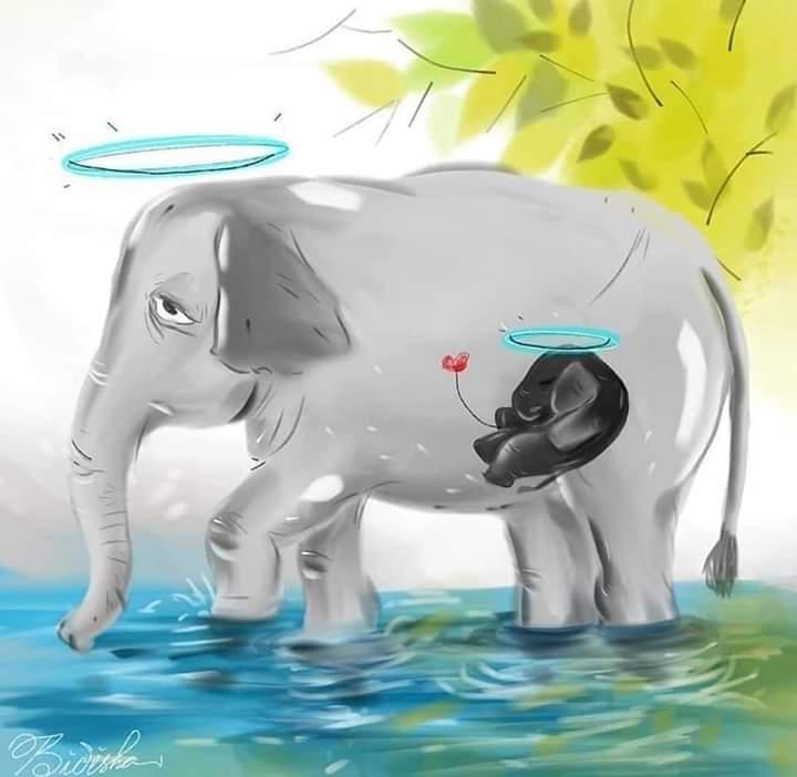 الفيل الذى أثار ضجة في جميع انحاء الهند Fb_img13