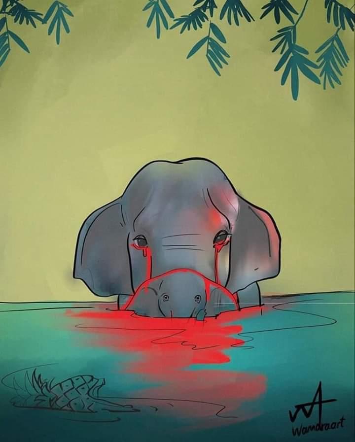 الفيل الذى أثار ضجة في جميع انحاء الهند Fb_img16