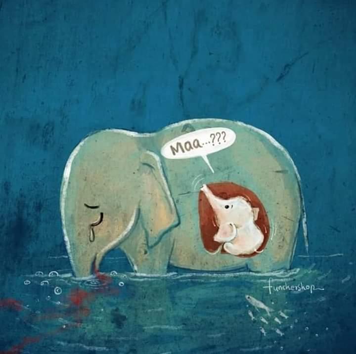 الفيل الذى أثار ضجة في جميع انحاء الهند Fb_img18