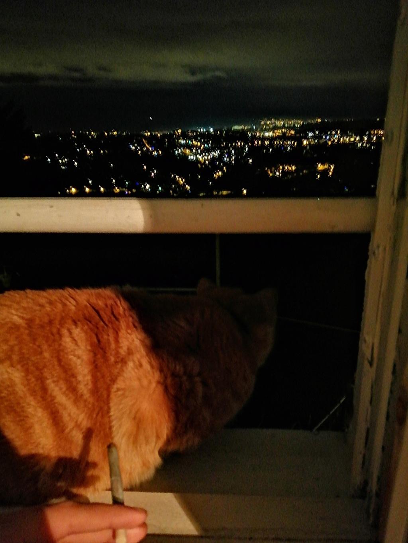 Des écrivain·e·s et des chats (avec des photos) Img_2043